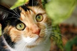 Blue Sky Pet Services - Knoxville Pet Sitter - Cat Photo