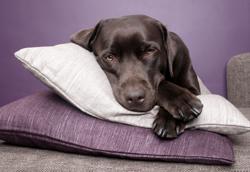 Blue Sky Pet Services - Knoxville Pet Sitter - Dog Photo